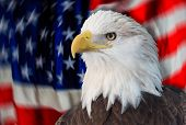 Bald eagle with the american flag out of focus and grunge look.