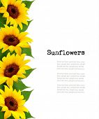 image of sunflower  - Sunflowers Background With Sunflower And Leaves - JPG