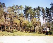 Trees In Dordogne