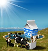 Постер, плакат: Cows Grazing With Milk Beverage Carton