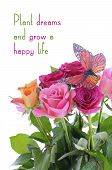 pic of monarch butterfly  - Pink fuchsia and yellow rose buds with monarch butterfly with inspirational quote against white background - JPG