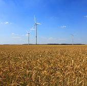 wind turbines on a field