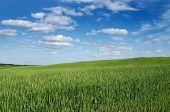 Landscape a field of a cloud
