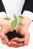 business men,  plant