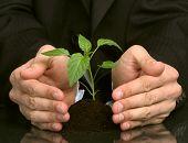 business men  a plant between hands