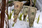 Spring Financial Growth