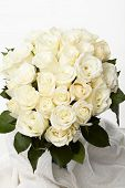 stock photo of rose flower  - Cream roses - JPG