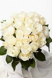 stock photo of rose flower  - Cream roses - JPG