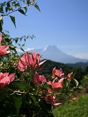 Looking At Mt Kinabalu