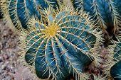 Round Shaped Cactus. Cactus Decor. Cactus Flower. Cactus Desert. Cactus Landscape. Cactus Silhouette poster