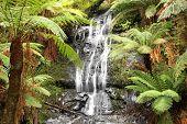Rainforest Waterfall