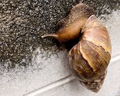 Snail show a slow life and slow business