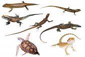 Australian Reptiles Isolated poster