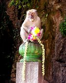 Un mono en Malasia Bata cuevas