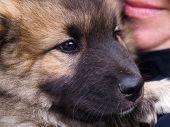 Puppy Dog In Closeup