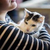 Frightened Kitten In The Hands Of Girl Volunteer, In Shelter For Homeless Animals. Kitten Will Have  poster