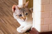 Cat,kitty Isolate On Background,front View From The Top, Technical Cost-up. poster