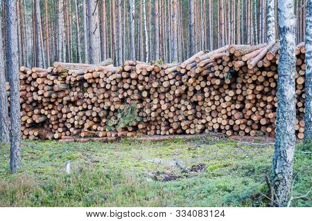 poster of Lot Of Natural Wooden Logs Cut And Stacked In Pile, Felled By The Logging Timber Industry. Pile Of F