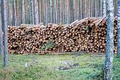 Lot Of Natural Wooden Logs Cut And Stacked In Pile, Felled By The Logging Timber Industry. Pile Of F poster