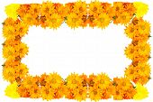 Orange Flowers Frame