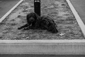 Homeless Dog Lies On The Ground.homeless Dog Lies On The Ground poster