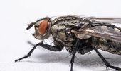 Macro Photo Of A Fly As A Background poster