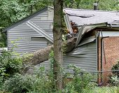 Oak Tree Crushing A House