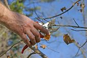 Pruning A Tree Branch