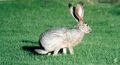 Bunny On Grass