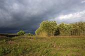 Cielos de tormenta de verano
