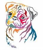Colorful Decorative Contour Outline Portrait Of Dog  Pug, Vector Illustration In Different Colors Is poster