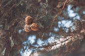 Hazelnuts Grow On A Branch. Macro Close-up. Nature, Macro, Background. poster