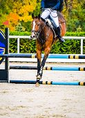 Horse And Rider In Uniform Performing Jump At Show Jumping Competition. Horse Vertical Banner For We poster