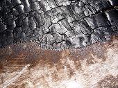 Burnt Tree Bark