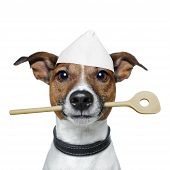 Chef Dog With Cooking  Spoon