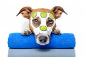 picture of pimples  - Dog With A Beauty Mask and a towel - JPG
