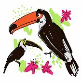Vector Hand Draw Illustration Of Tropical Birds - Carrots, Toucans With Paint Drops, Abstract Elemen poster