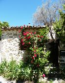 stock photo of climbing rose  - little house in Provence with a beautiful small garden and red roses climbing on the walland covering the window - JPG