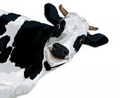 Funny smiling cow illustration on a white background