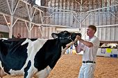 Mt Vernon, Wa - August 13 - Teen Shows Cow At Ffa County Fair Show