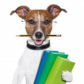 Escola cão