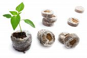 Peat Briquettes For Growing Seedlings