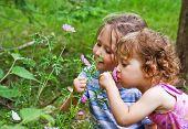 Постер, плакат: Маленькие девочки пахнущие цветы