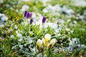 Blumen wachsen im Schnee