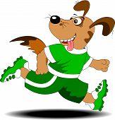 Maratona de cão