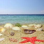 Sea Shells And Perls