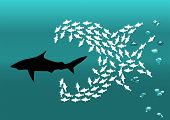 stock photo of carnivores  - flock of small fish attacks the big shark - JPG