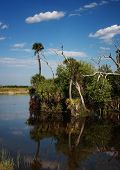 stock photo of marshlands  - Flat glassy waters of a Florida marshland reflect the trees and clouds on a sunny springtime day - JPG