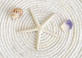 Starfish and Shells on White Rope