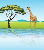 Illustration of a giraffe beside the river